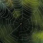 Ιστοί αράχνης για την αντιμετώπιση νευρολογικών και μυϊκών παθήσεων