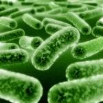 Πότε ενδείκνυται η λήψη προβιοτικών