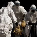 Κίνα: Εξήντα ένα κρούσματα, 14 νεκροί από τον ιό της γρίπης των πτηνών
