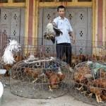 Κίνα: «Λουκέτο» στα καταστήματα πουλερικών λόγω του ιού Η7Ν9