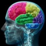 Επιστήμονες κατέστησαν διάφανο τον εγκέφαλο