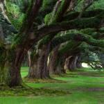 Τα δέντρα στην περιοχή που ζούμε επηρεάζουν την υγεία