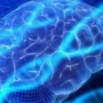 Οι βιταμίνες του συμπλέγματος Β αποτρέπουν την συρρίκνωση του εγκεφάλου