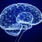 Τρισδιάστατος χάρτης του ανθρώπινου εγκεφάλου