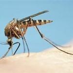 Οσμές του ανθρώπινου σώματος προσελκύουν τα κουνούπια