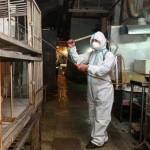proti-metadosi-H7N9