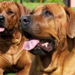 dog-diatrofi