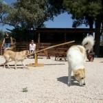 puppies_park1